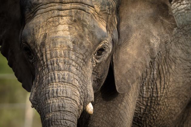 New elephant arrives at Bristol Zoo Gardens