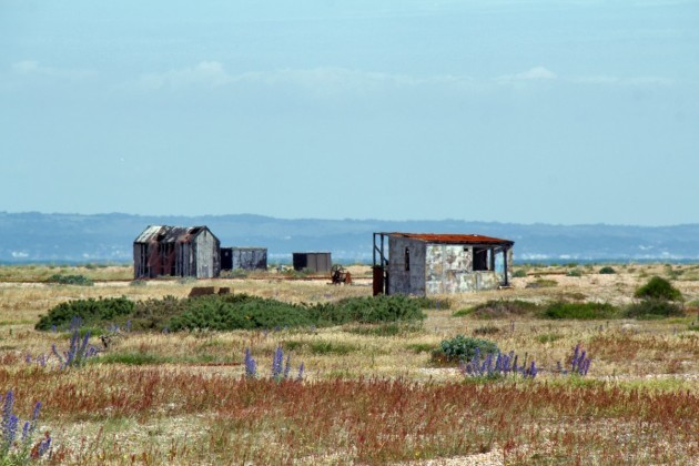 the-deserts-distinctive-and-undisturbed-landscape-is-mostly-shingle-sand-and-patches-of-overgrown-foliage-with-scatterings-of-old-fishing-huts-houses-and-railway-coaches