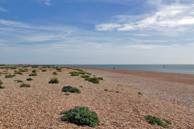 i-can-safely-say-that-in-my-25-plus-years-at-strutt-and-parker-i-havenever-sold-or-will-ever-sell-anything-quite-like-the-dungeness-estate-said-mark-mcandrew-head-of-strutt-and-parkers-estate-and-farm-sales