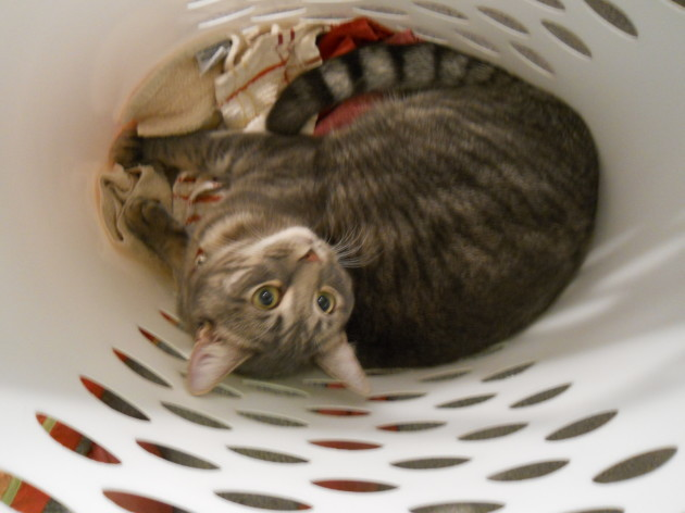 Cat_in_Laundry_Basket