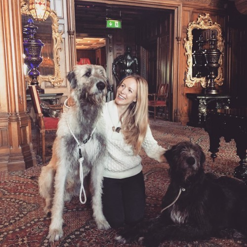 Bailey's going to be jealous! #ashford_wolfhounds #ashfordcastle #puppylove