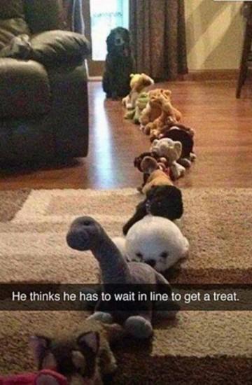 doggie