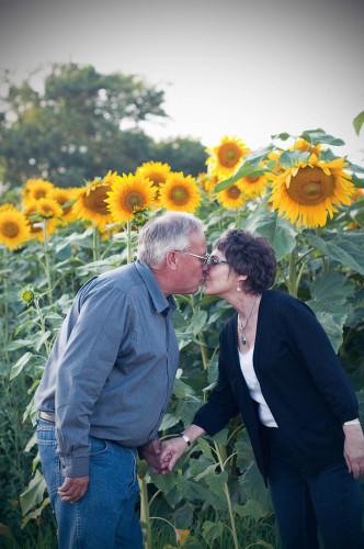 sunflowers - 1