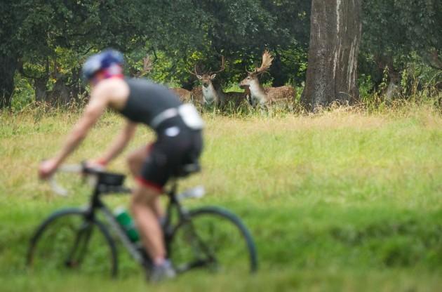 Competitors pass deer in the Phoenix park