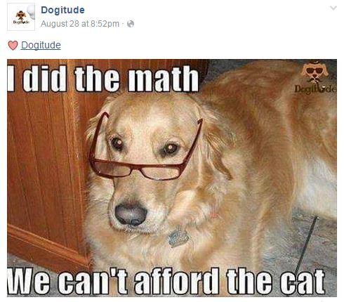 dogitude