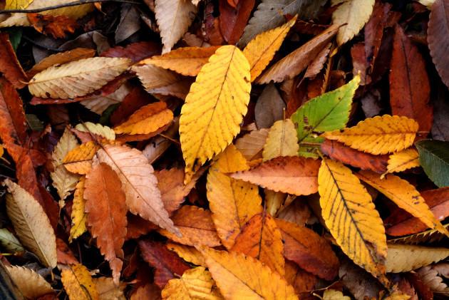 Autumn_Leaf_08Nov17