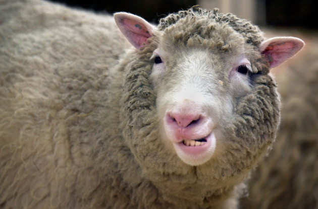 Dolly - The cloned sheep