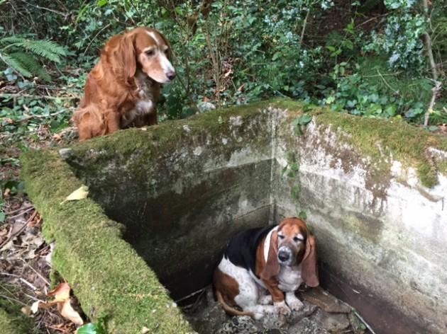Dog Guards Dog