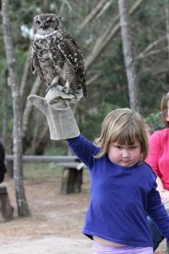 owlgirl