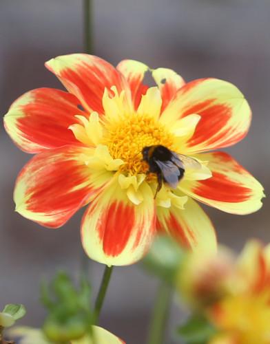 Bees 717 copy