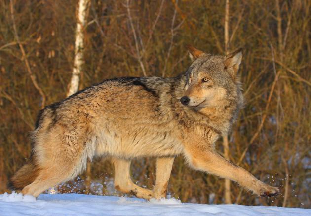 Wolf Valeriy Yurko  Incr Res