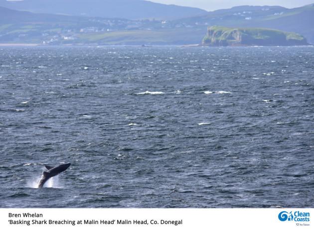 Bren-Whelan-Whale-Breaching