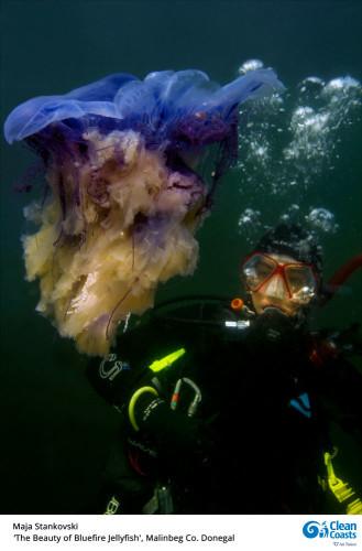 Maja-Stankovski-The-Beauty-of-Bluefire-Jellyfish