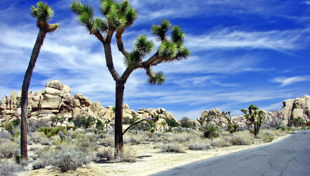 Sky and Rocks, Joshua Tree NP 4-13