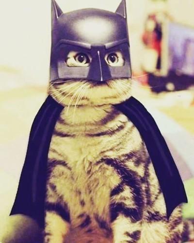 #Catcostume for halloween #halloween