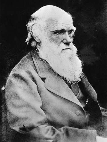 Britain Darwin