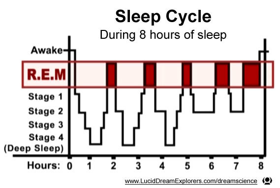 sleep_cycle_REM_8_hour_graph