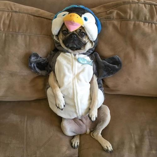 I go to bed hot and wake up freezing -Doug