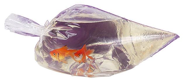Plastic-fish-Bags