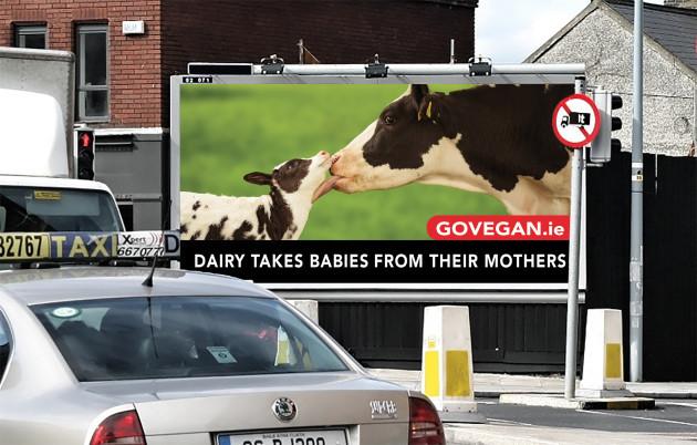48s-Dairy