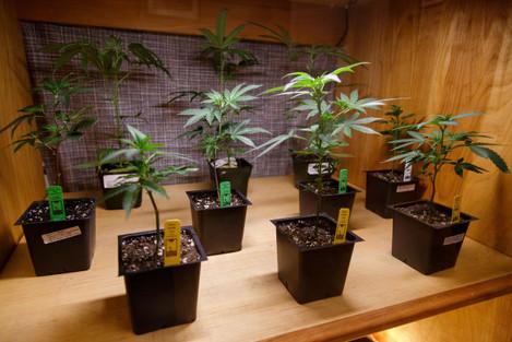 Oregon Pot Stores