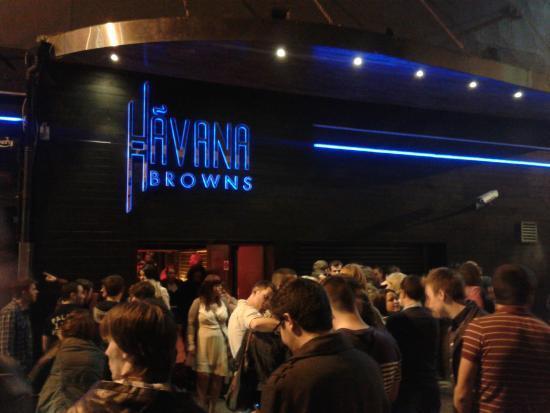 havana-browns