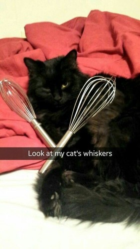 catswhiskers