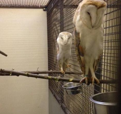 owls - 1