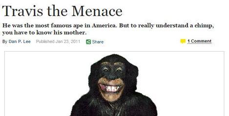 ny mag chimp