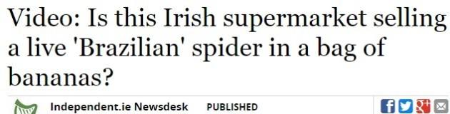 headlinespider