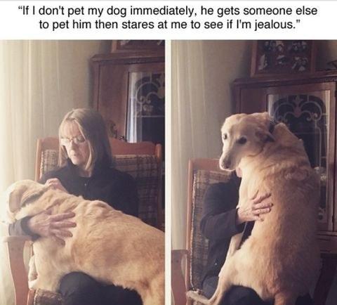 if-i-dont-pet-my-dog