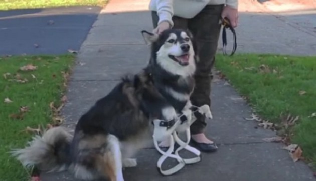 bionicdog-derby-3d-printed-legs-3 ... https://www.youtube.com/watch?v=-yu_zVre0k4