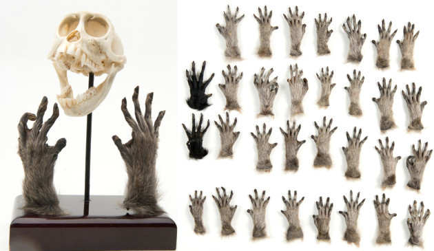 monkeyhands