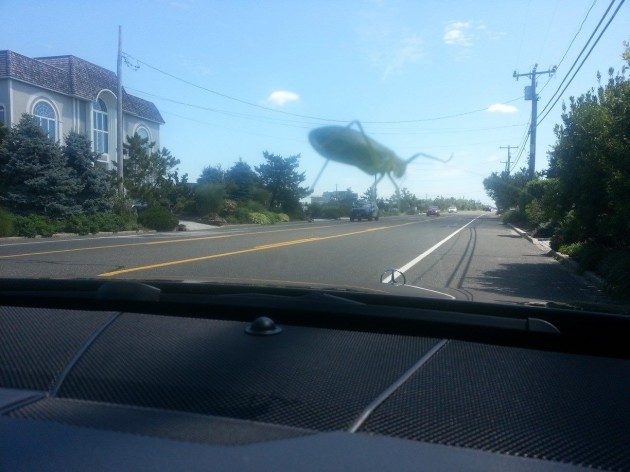 Tried to take a photo of a grasshopper on my windshield, but it looks like its giant and destroying the town