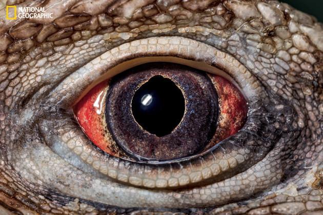 evolution_of_eyes_ngm_022016_MM8355_001