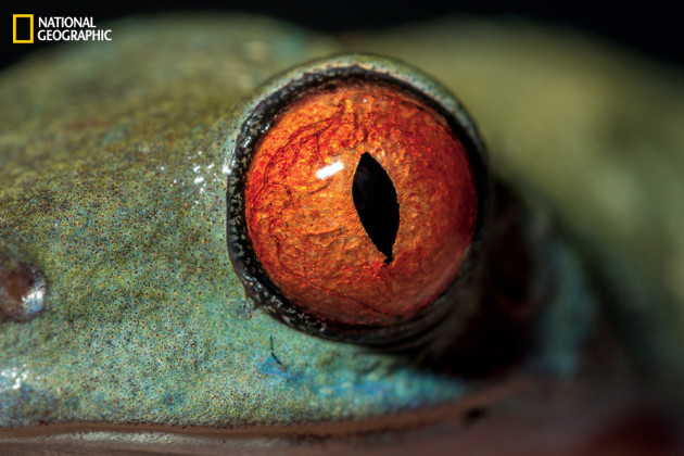 evolution_of_eyes_ngm_022016_MM8355_007
