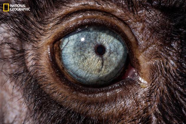 evolution_of_eyes_ngm_022016_MM8355_013
