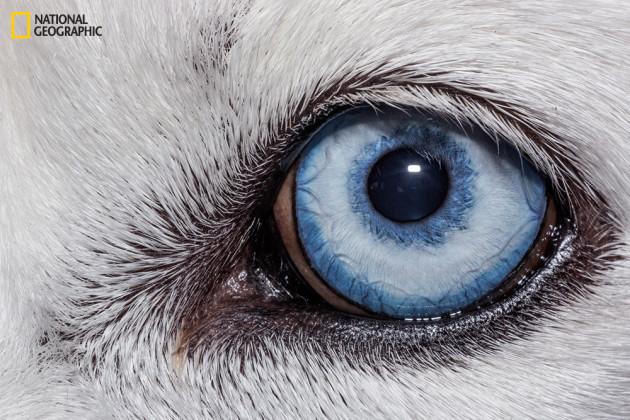 evolution_of_eyes_ngm_022016_MM8355_015