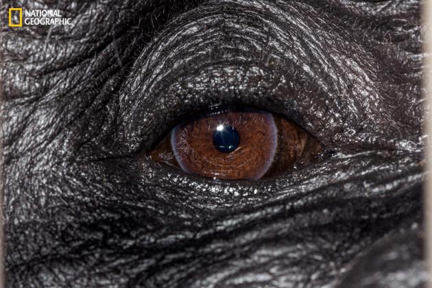 evolution_of_eyes_ngm_022016_MM8355_016