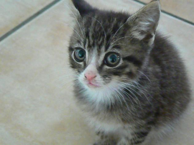 Midge our cute new kitten cat