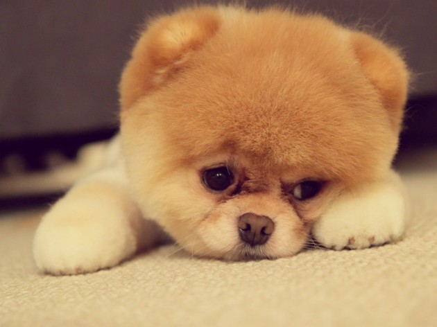 Sad-Puppy-Face