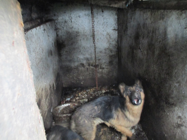 13 dogs rescued from horrifying conditions in Cork