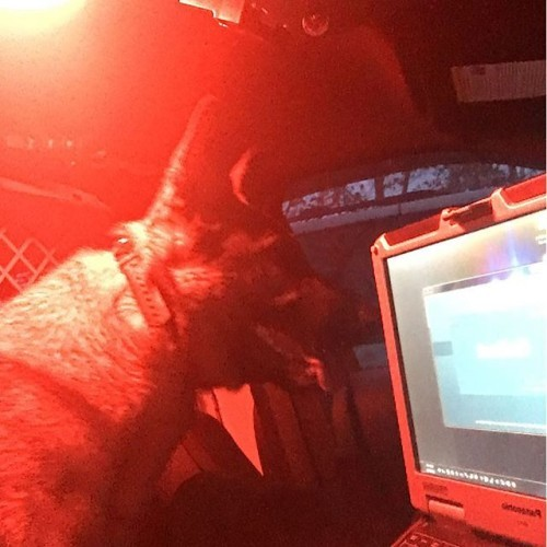 Getting ready for shit! #workingdog #germanshepherd #germansheperddaily #germanshepherdsofinstagram #dog #dogoftheday #dogsofinstagram #police #policek9 #policedog #k9 #k9unit #k9trooper #max #maximus #vt #adopted #adopteddog #adoptdontshop #rescue #rescuedog #gsd #gsdofinstagram