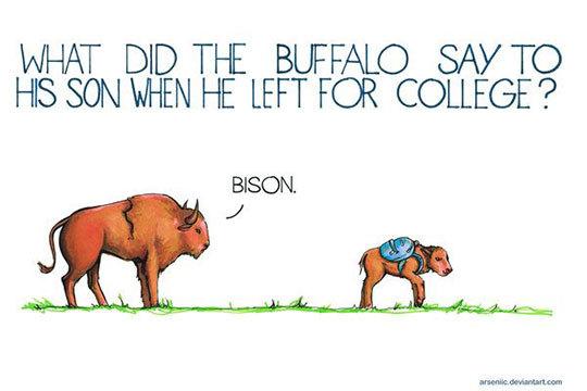 funny-bison-cartoon-joke-bye1