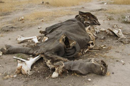 Zimbabwe Poisoned Elephants