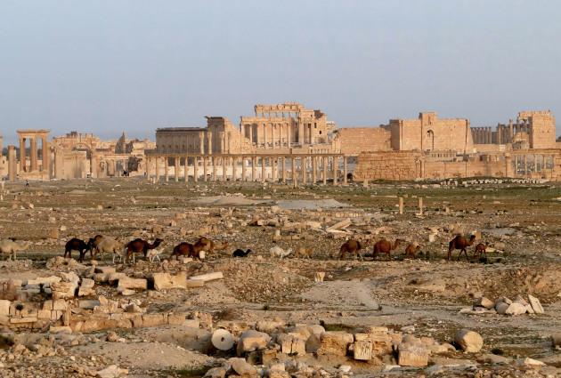Palmyra_03