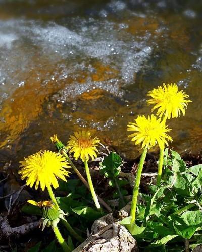 Waters Run Deep II  #westjordan #slc #utah #mountains #donutfalls #nature #beautifulday #backtonature #rushingwater #dandylions #pissthebeds #snowdaysofspring #sundaydrive #qualitytime #funday #foofoo