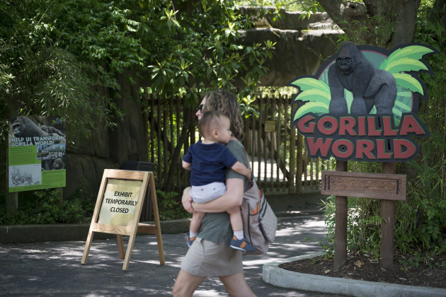 Zoo Gorilla Child Hurt