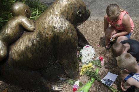 Zoo Gorilla Child Hurt