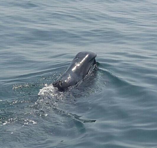 whale - 1